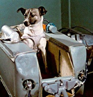 60 años del viaje al espacio de la perrita Laika a bordo del Sputnik II